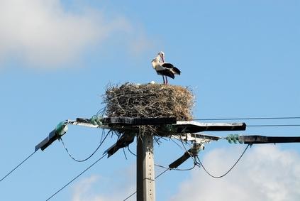 nid cigogne pylone electrique