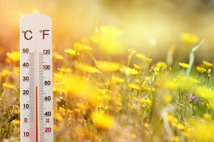 Thermomètre dans un champ de fleurs.